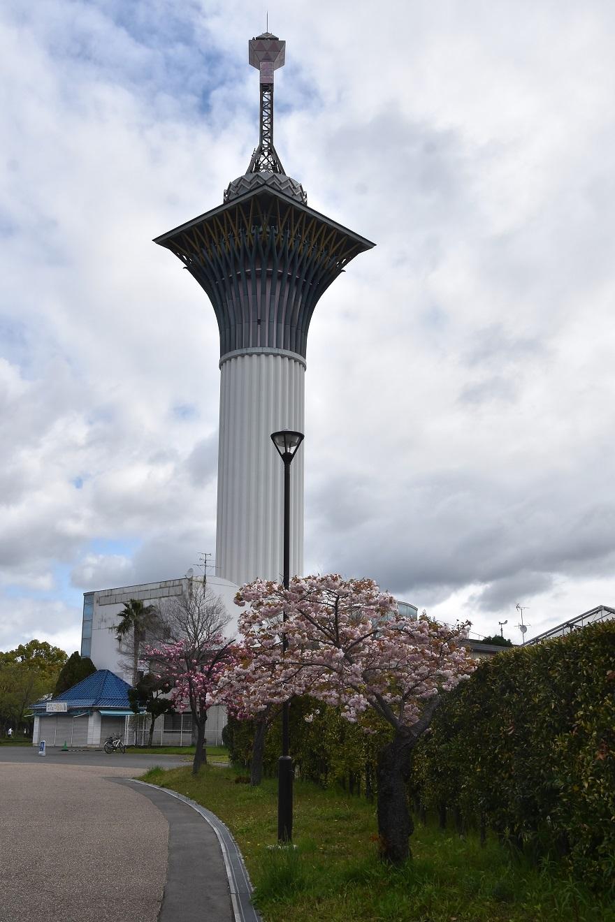鶴見・八重桜 2020 (7)