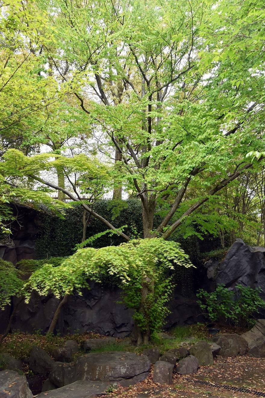 鶴見・花の谷 (1)