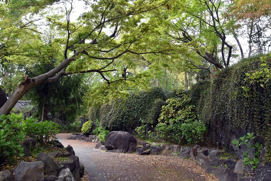 鶴見・花の谷 (2)