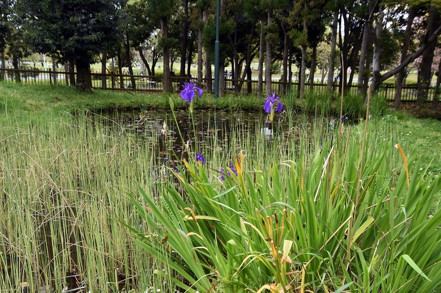 鶴見・花の谷 (6)