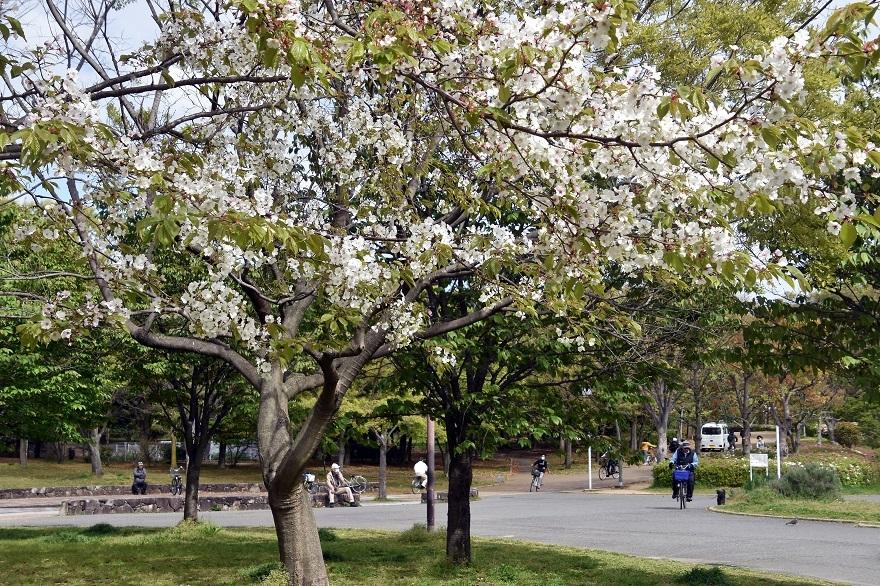 鶴見・4月の花#1 (3)