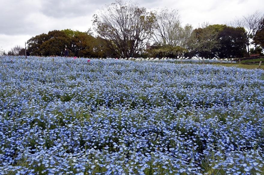 鶴見・4月の花#2 (1)