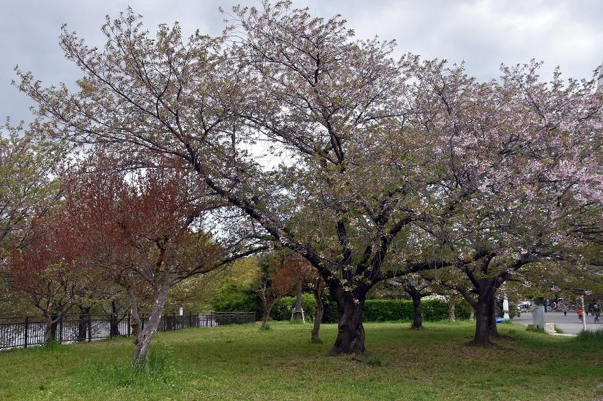 鶴見・4月の花#2 (15)