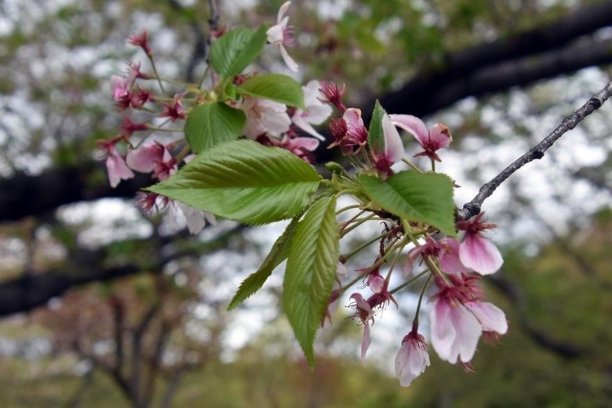 鶴見・4月の花#2 (016)