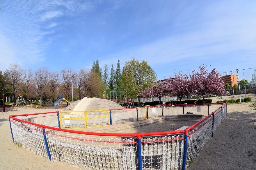 平野公園八重桜 (4)