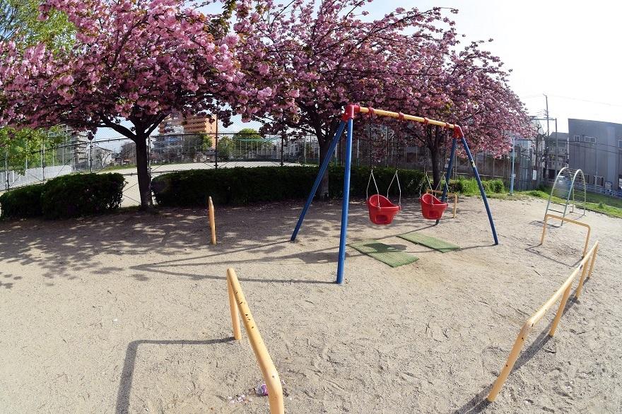 平野公園八重桜 (03)
