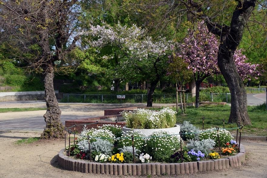 平野公園八重桜 (0010)