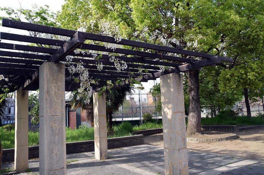 平野公園八重桜 (25)
