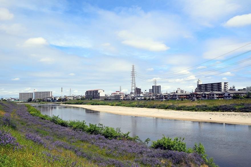 大和川河川敷 2020 (0)