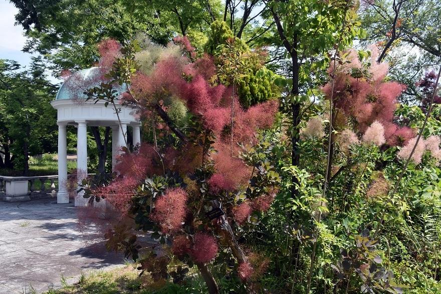鶴見・イギリス庭園とスモークツリー (0)