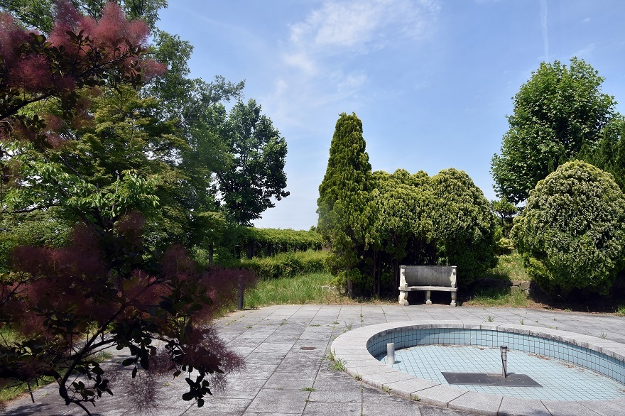 鶴見・イギリス庭園とスモークツリー (6)