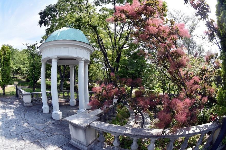 鶴見・イギリス庭園とスモークツリー (13)