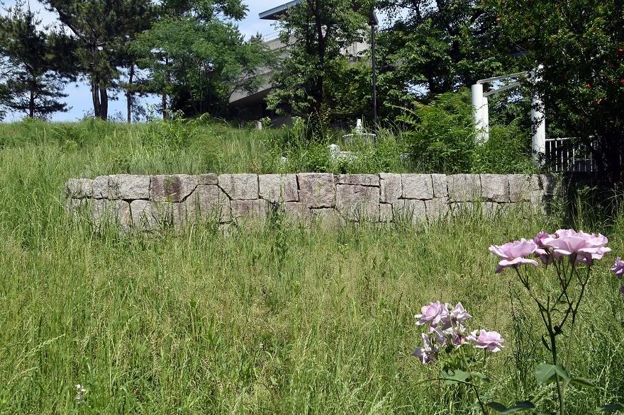 鶴見・トルコ庭園とバラ (1)