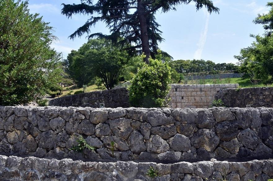 鶴見・イスラエル庭園とザクロ (5)