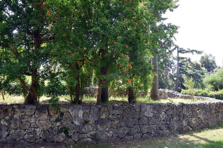 鶴見・イスラエル庭園とザクロ (10)
