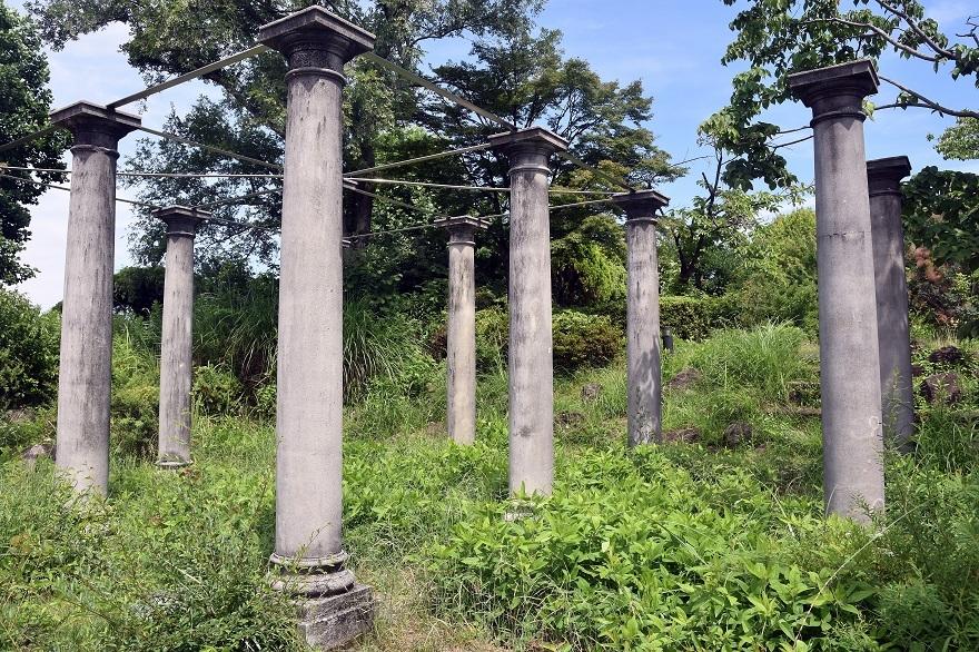 鶴見・イギリス庭園とスモークツリー (016)
