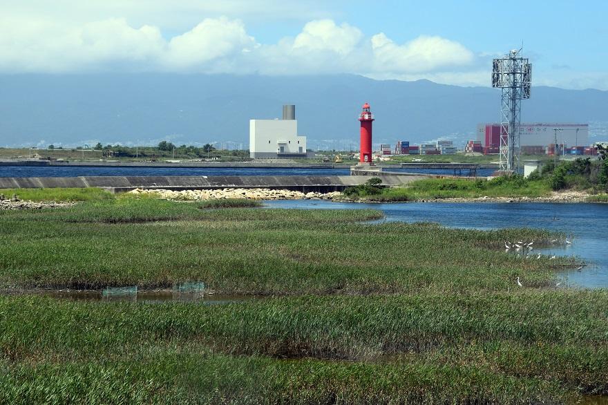 大阪南港野鳥園2020・8月 (0)