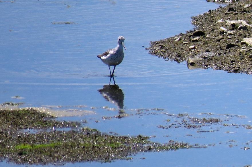 大阪南港野鳥園2020・8月 (5)