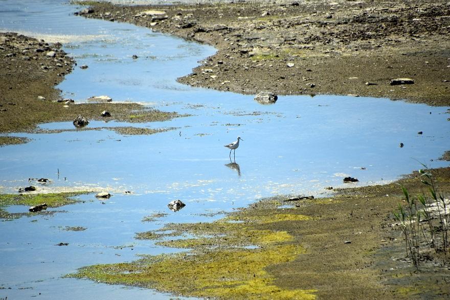 大阪南港野鳥園2020・8月 (4)