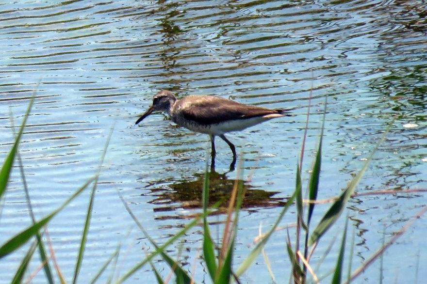 大阪南港野鳥園2020・8月 (7)