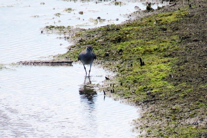 大阪南港野鳥園2020・8月 (9)