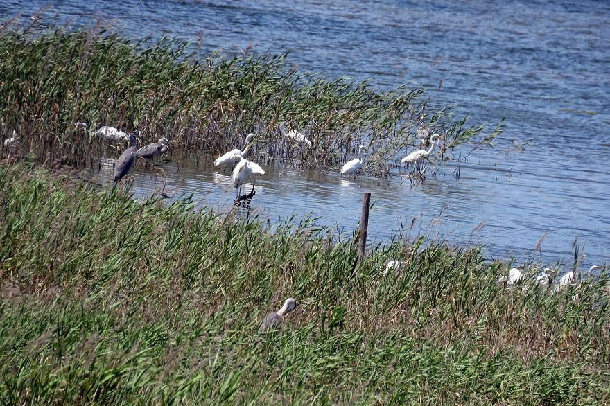 大阪南港野鳥園2020・8月 (13)