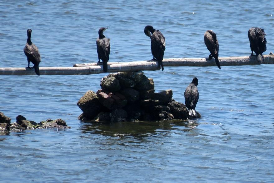 大阪南港野鳥園2020・8月 (17)