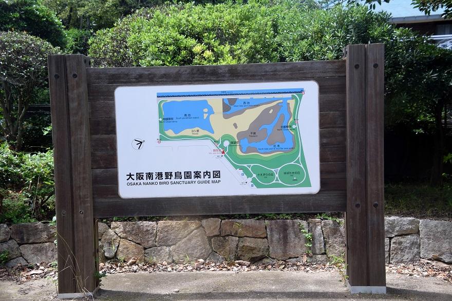 大阪南港野鳥園2020・8月 (20)
