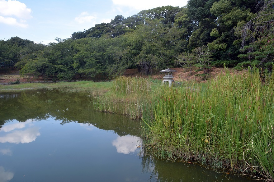 鶴見・四季の池2020年8月 (0)