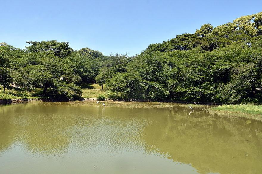 鶴見・四季の池・6月 (00)