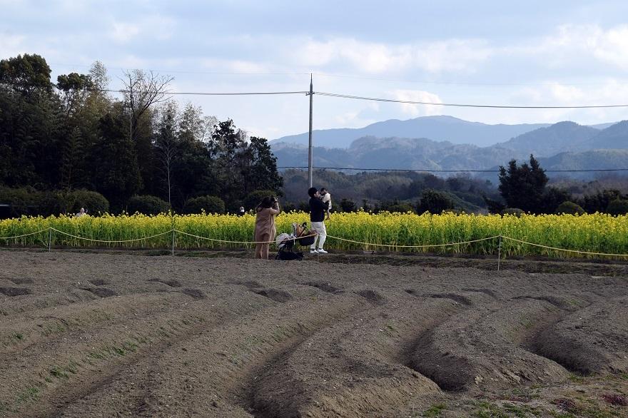 和泉リサイクル菜の花2021 (8)