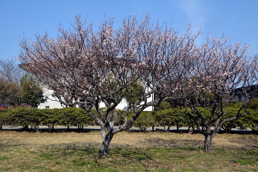 平城京の梅園 (0)