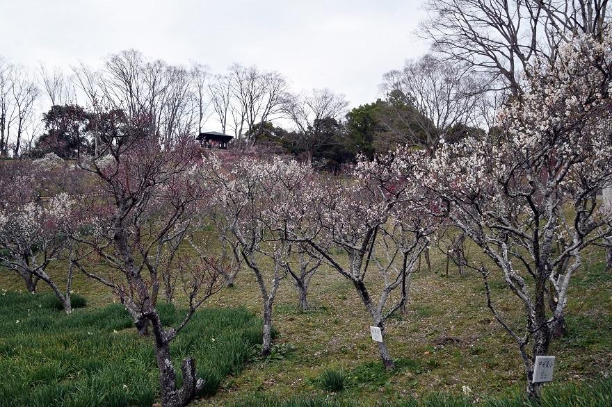 錦織公園の梅の里 (0)