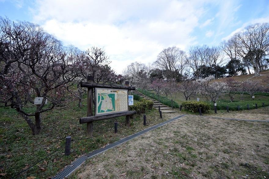 錦織公園の梅の里 (23)