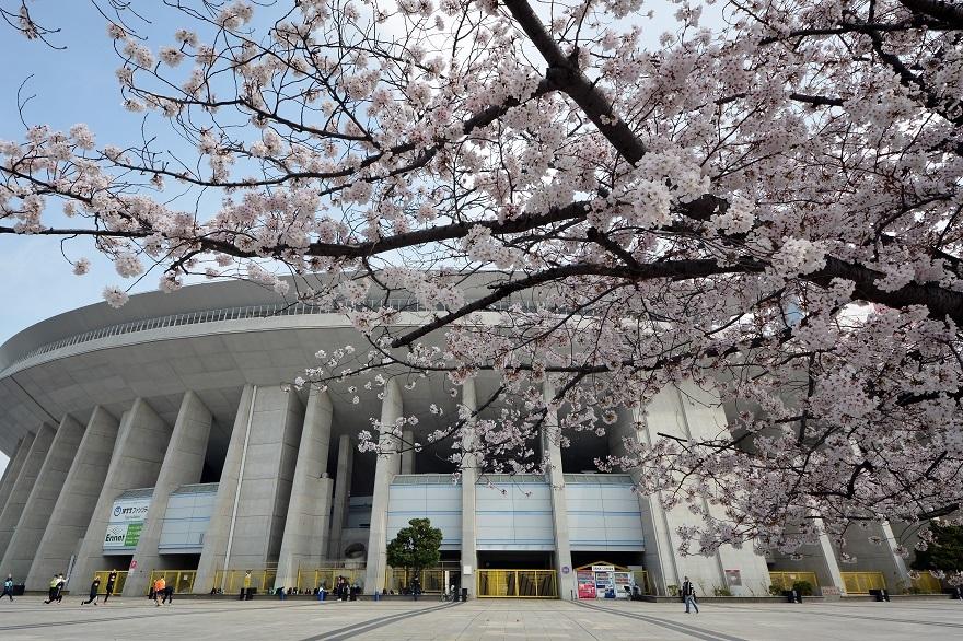 長居公園・桜2021年3月 (0)
