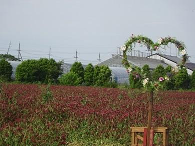 ひまわり村