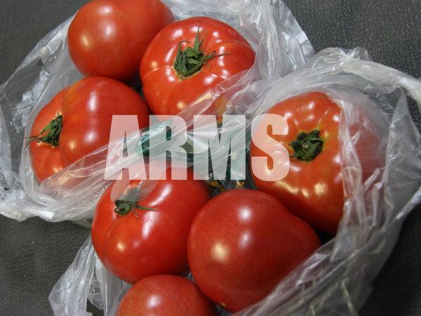 郡上市のトマト