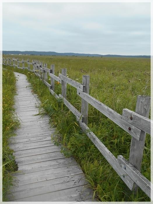 2020年7月 霧多布湿原 仲の浜木道5