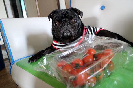 ミニトマトだよ