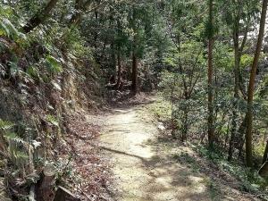 整備されたハイキング道