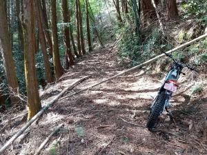 倒木に遮られた道