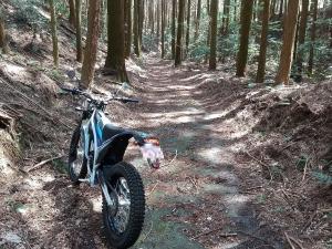 気持ちの良い林道
