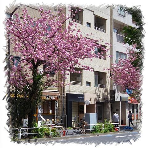 ichigonecogoori03.jpg