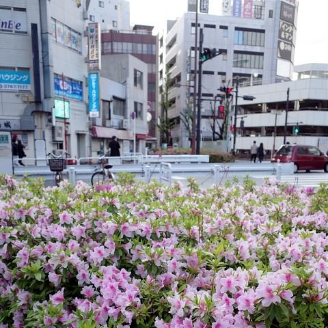 togotsuki16.jpg