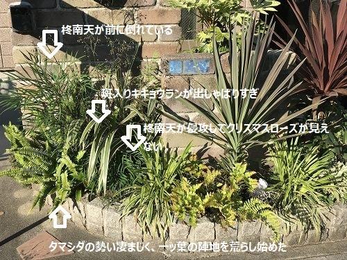 IMG_5561こめ