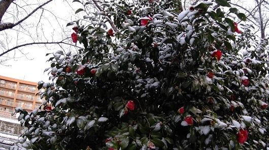 雪がつもった