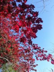 上野公園の紅葉 2020.11.