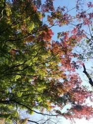 上野公園 の紅葉 2020.11