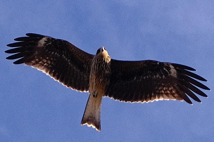 200824b5.jpg