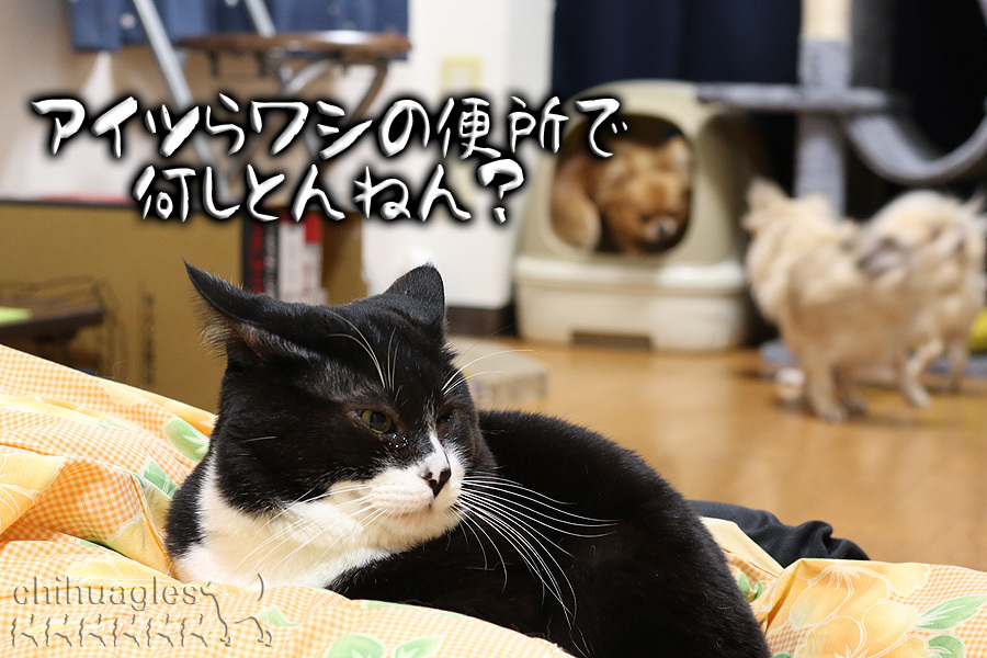猫がチワワを見ている